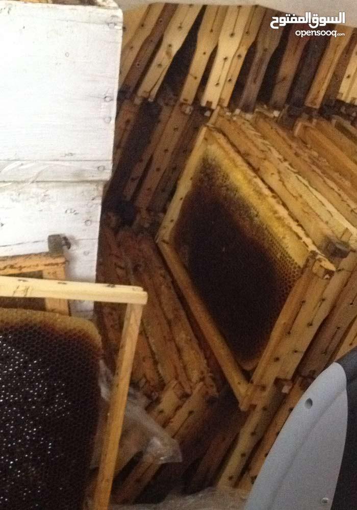 عسل الزعتر  حر  للبيع