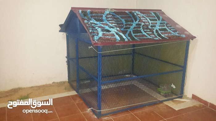 منزل كلب للبيع خدمة مية مية البيع لأعلي سعر