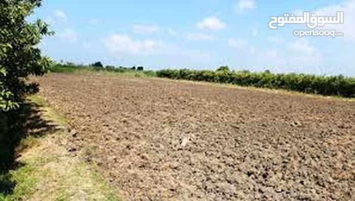 اراضي زراعيه للبيع مستصلحه وجاهزه للزراعه