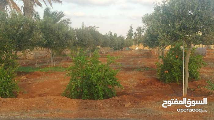مزرعه للبيع 7000م بالحنش طريق بوهادى مزرعه مثمره