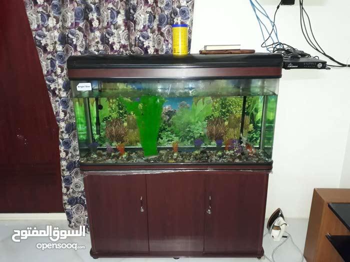 حوض السمك للبيع