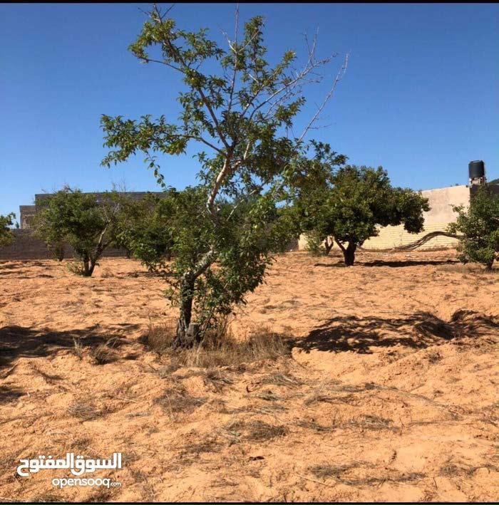 ارض للبيع مساحة نص هكتار تقع محلة الوادي الشرقي /تاجوراء