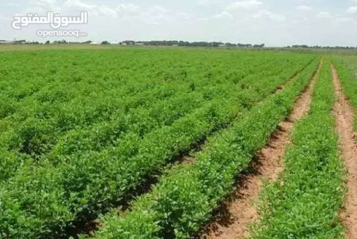 ارض زراعية مميزة للبيع بتمي الامديد السيمبلاوين