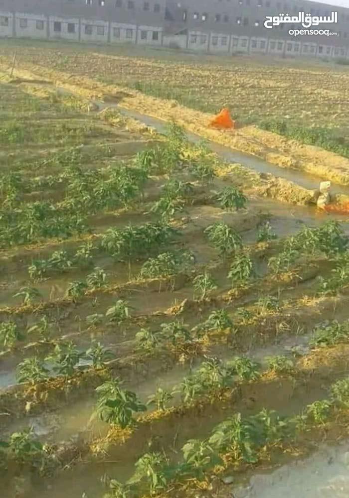 أرض زراعيه مستوى مسموح تعامل فى أي حاجة مضمون  زي مشروع او فيلا أو استراحة في جم