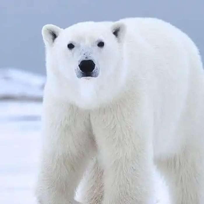 مؤسسة الجليد للتكييف